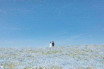 ネモフィラ畑で前撮り | 夫婦フォト