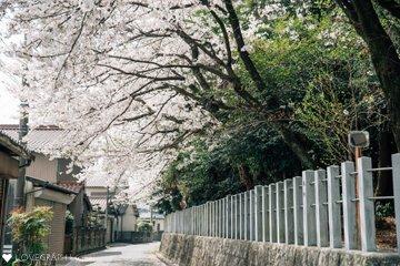 Tsumugiお宮参り | 家族写真(ファミリーフォト)