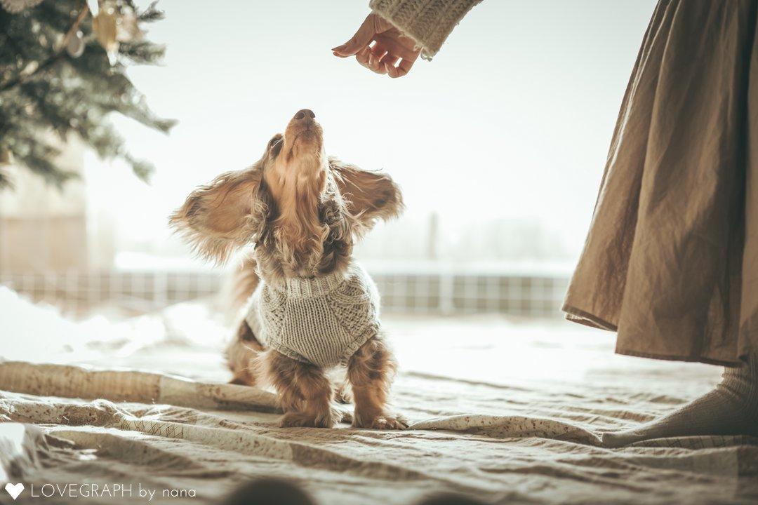 Kina Choco Christmas | 家族写真(ファミリーフォト)